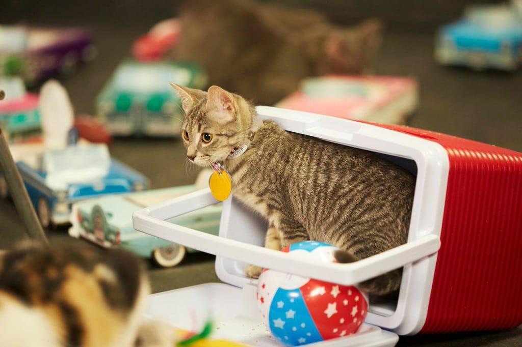 Kitten Bowl Hallmark 2