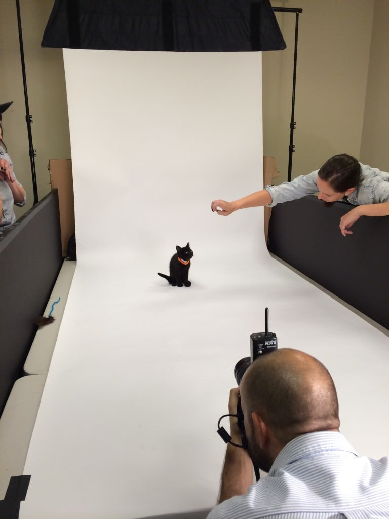 And of course, a kitty photo shoot.