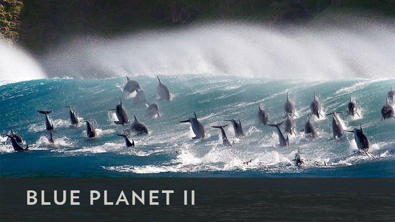 BBCA Blue Planet II Reviews