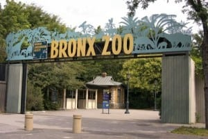 The Zoo Animal Planet