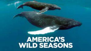 America's Wild Seasons: Spring